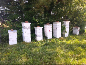Carter Family Bees Hives