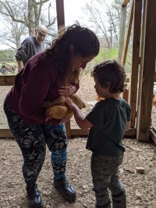 Young child petting a chicken.