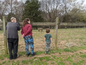 Older couple and young child look out over sheep pasture