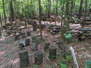 Nasi and Teri's immense pine forest is an ideal ecosystem for growing mushrooms.